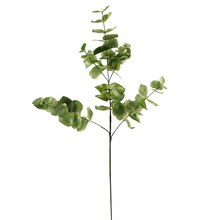 Ashland Eucalyptus Branch, Light Sage