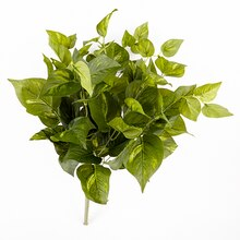Ashland Real Touch Collection Green Pothos Bush