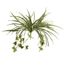 Ashland Classic Greenery Collection Green Spider Plant Bush