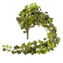 Ashland Ivy Collection Mini English Ivy Bush