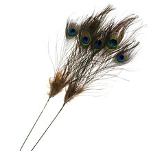 Peacock Feather Pick