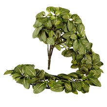 Ashland Classic Greenery Fittonia Hanging Bush