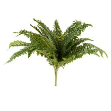 Ashland Fern Collection Boston Fern Bush