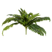 Ashland Fern Collection Boston Fern Bush 20""