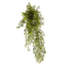 Ashland Fern Collection Springeri Bush