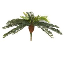 Ashland Fern Collection Large Cycas Bush