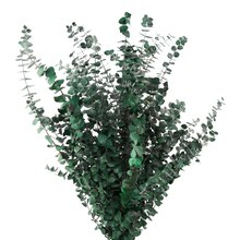 Ashland Eucalyptus Bunch, 16 oz.