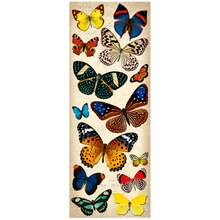 K&Company Adhesive Chipboard, Natural Butterflies