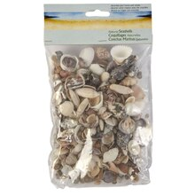 Natural Seashell Assortment