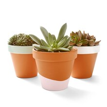 Martha Stewart Crafts® Vintage Clay Pots