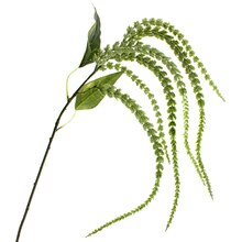 Green Amaranthus Stem by Ashland