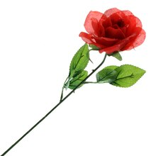 Red Dew Open Rose Stem by Ashland