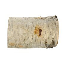 "5"" Birch Pillar by ArtMinds"