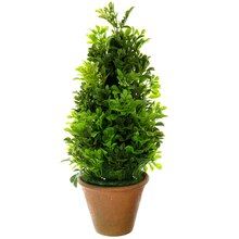 Topiary Boxwood Cone by Ashland