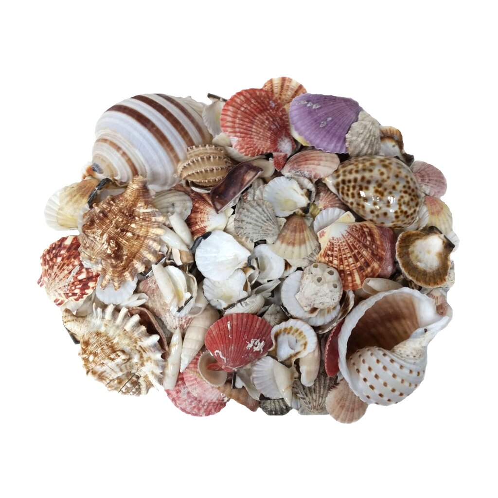 find the u s shell assorted shells at