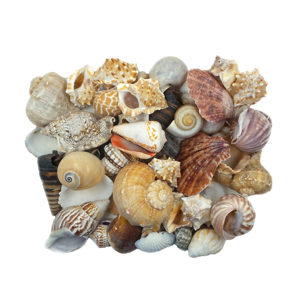 Buy The U S Shell Small Shells At Michaels