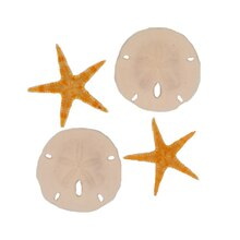 U.S. Shell Sand Dollars & Starfishes