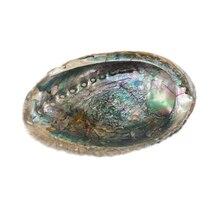 U.S. Shell Abalone Shell, Blue