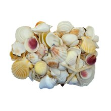 U.S. Shell Light Shell Mix with Starfish Gift Pack