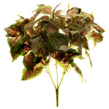 Red Coleus Bush by Ashland
