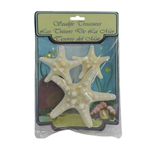 U.S. Shell Small Armored Starfish, Natural