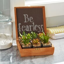 Succulent Tabletop Garden, medium