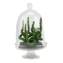 """5.75"""" Artificial Worm Succulent in Glass Terrarium with Cloche Dome Lid"""