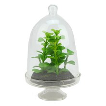 """5.75"""" Artificial Jade Plant in Glass Terrarium with Cloche Dome Lid"""