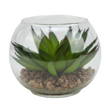 """4.5"""" Artificial Green Aloe Succulent Plant in Round Glass Vase"""