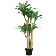 "43"" Tropical Dracaena Tree"