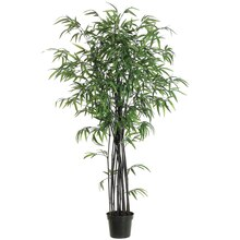 5 Ft. Black Bamboo Tree