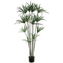5 Ft. Papyrus Plant