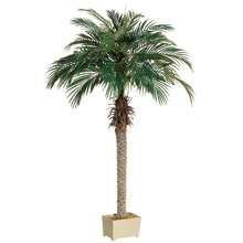 6 Ft. Phoenix Palm Tree