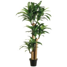 5 Ft. Tropical Dracaena Tree