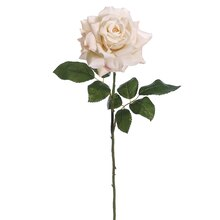 "25.5"" Open Rose Stem, Beige"