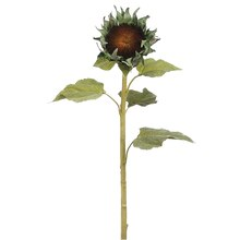 "32"" Sunflower Bud Stem, Green"