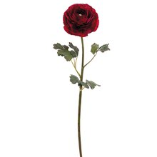 "24"" Ranunculus Stem, Dark Red"