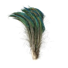 Peacock Feathers By Creatology