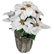 White Velvet Poinsettias By Ashland