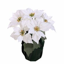 White & Green Poinsettia Pot By Ashland