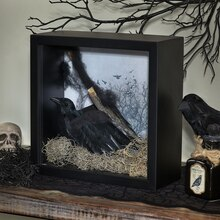 Raven's Nest Shadow Box, medium