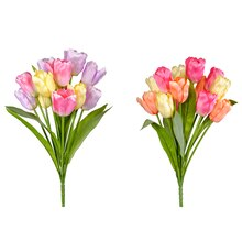 Tulip Bush By Ashland Assorted