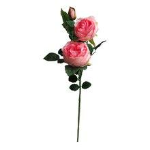 Pink English Rose Stem By Ashland