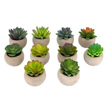 Molded Premade Succulent in Concrete Pot By Ashland
