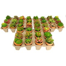Premade Potted Succulent By Ashland in Egg Crates