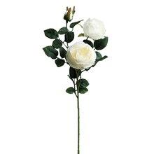 Cream English Rose Stem By Ashland