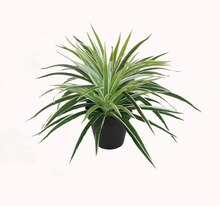 Artificial Potted Two Tone Green Grass Plant with Black Pot