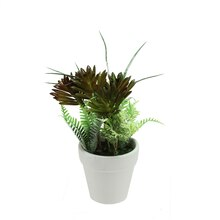 Artificial Green and Red Succulent and Fern with Round White Pot