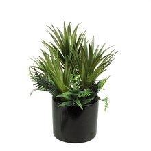 Artificial Mixed Green Succulents and Ferns with Black Pot