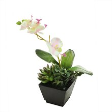 "13"" Artificial White, Pink & Green Orchid with Succulents in Square Black Pot"